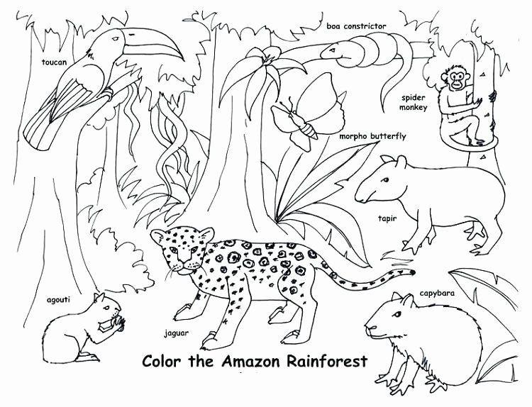 Animal Habitat Coloring Pages Beautiful Animal Habitat Coloring Pages Geografi Gambar