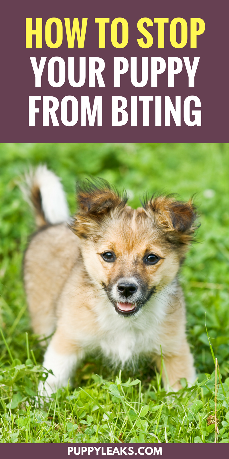 3 Simple Ways To Stop Your Puppy From Biting Puppy Leaks Puppy Training Biting Puppy Biting Training Your Puppy