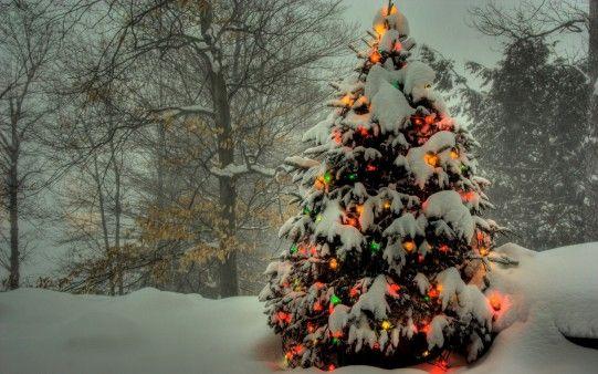 Christmas 2560x1600 Wallpaper Desktop Wallpapers Hd Free Backgrounds Christmas Tree Wallpaper Snowy Christmas Tree Christmas Landscape