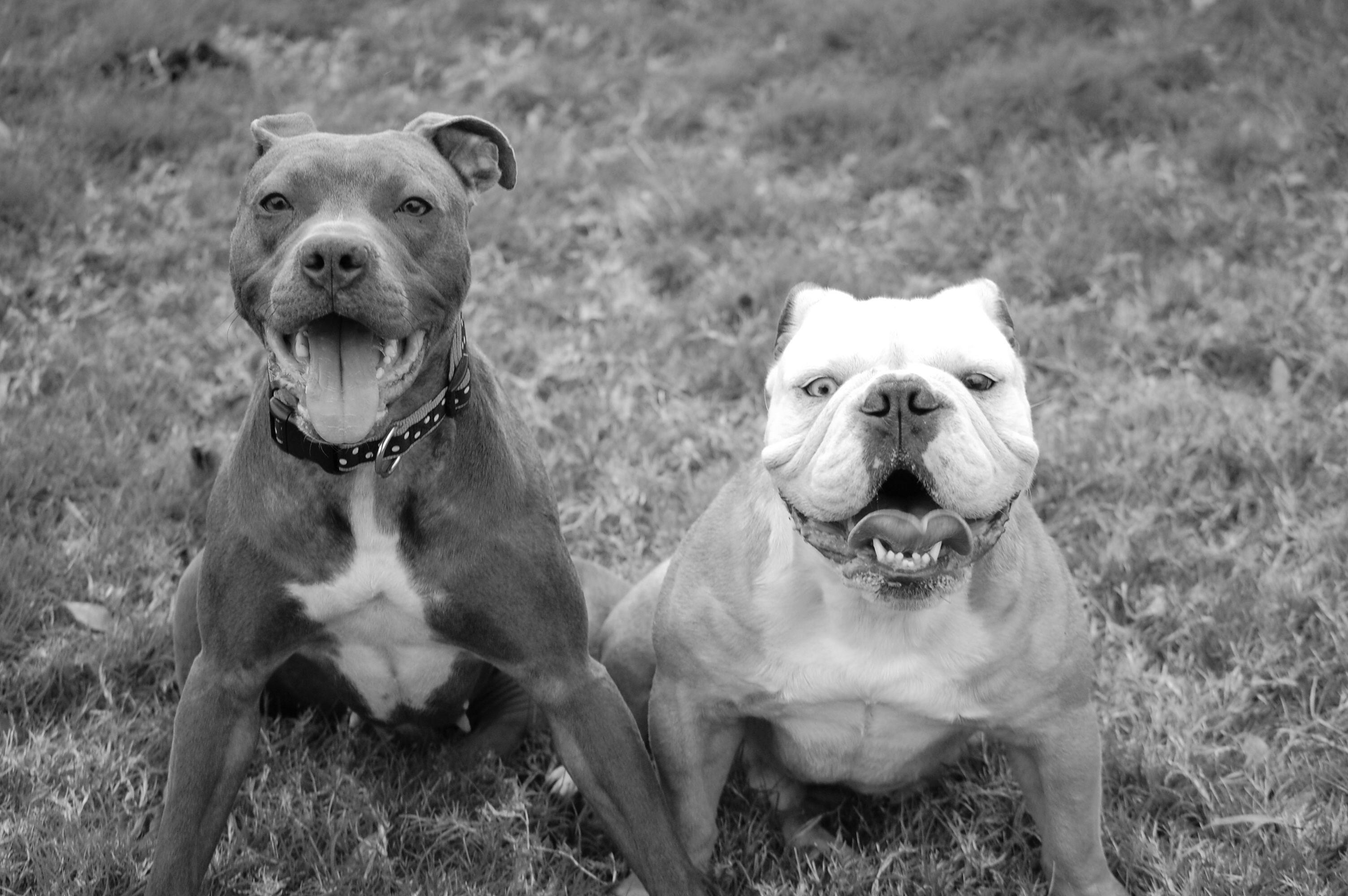 Rem & Zeus | Cute animals, Pets