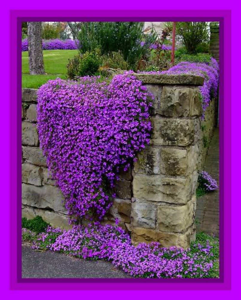 Stone Wall With Beautiful Purple Flowers I Like How The
