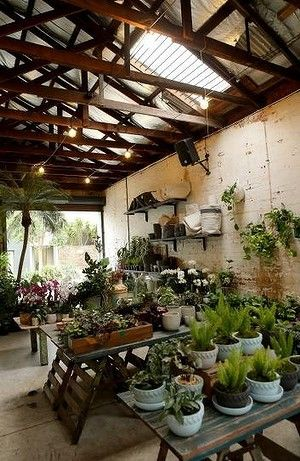 Glhaus Indoor Plant Nursery In Richmond Has Had Skylights Added To The Roof Provide More Light For Plants