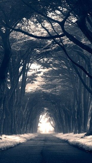 Dark Trees Avenue The Iphone Wallpapers Scenery Wallpaper Dark Wallpaper Dark Tree