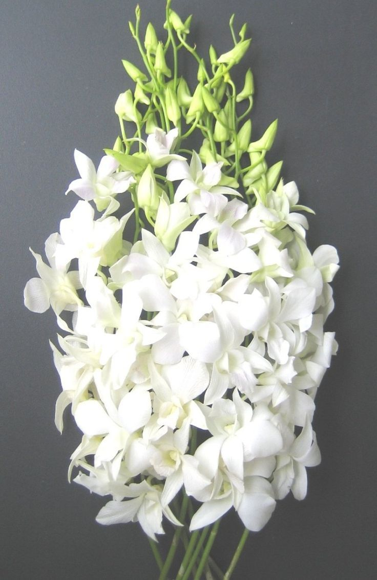 White Hawaiian Dendrobium Orchids | Dendrobium Orchids