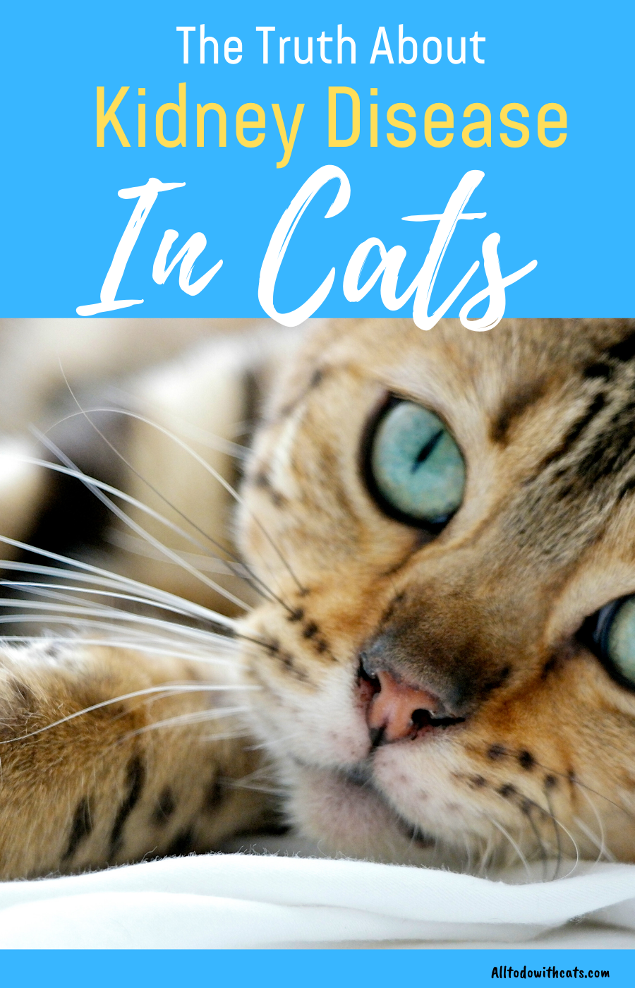 Kidney Disease Symptoms In Cats What You Need Toknow Cat Diseases Kitten Care Cat Remedies