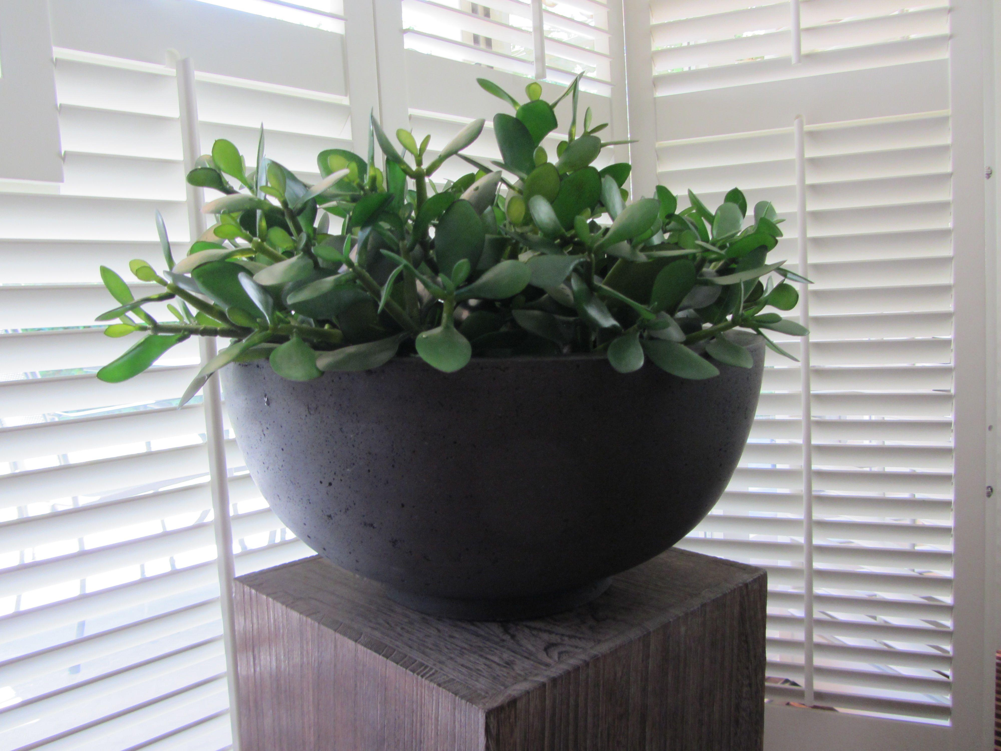15x Eucalyptus Huis : Schaal gevuld met crassula vetplantjes. www.abonneefleur.nl
