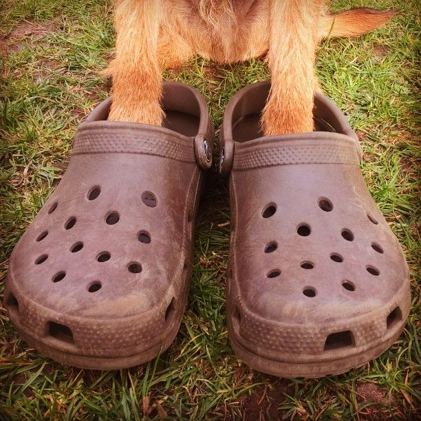 51c8d1243b65 Muddy  paws!!  mud  paw  shoes  feet  bigfeet  Crocs  walk  walks ...