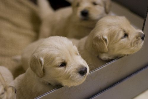 Cute Puppies Puppy Help Cute Dog Pictures Puppies