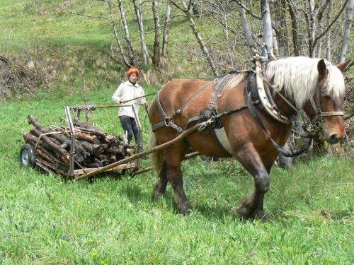 nouveau harnais en traits et brancards le cheval de travail le cheval au travail horse at. Black Bedroom Furniture Sets. Home Design Ideas