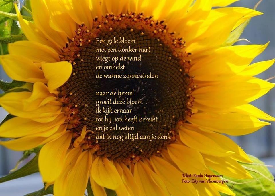Afbeeldingsresultaat voor gedicht zonnebloem toon hermans for Piekeren engels