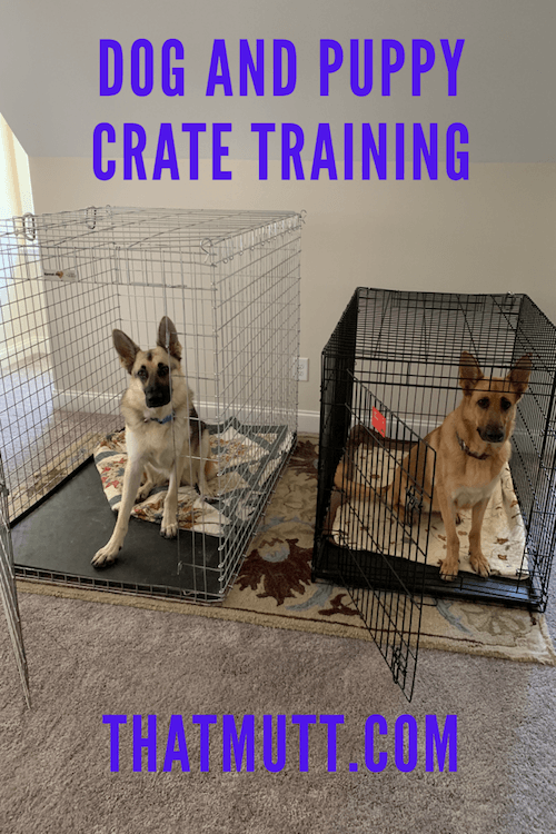 Dog And Puppy Crate Training Crate Training Puppy Puppy Crate Crate Training Dog