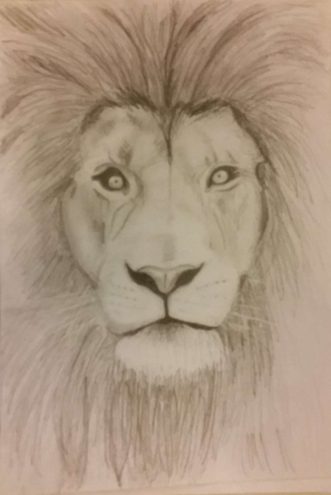 12 Lion Sketches And Drawings Sketch Drawingpencilwiki Com In 2020 Lion Sketch Lion Drawing Simple Pencil Sketches Of Animals
