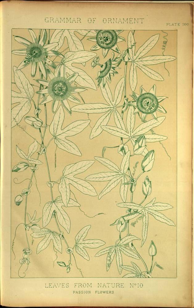Passion Flower Owen Jones The Grammar Of Ornament 1856 Flower Drawing Passion Flower Botanical Painting