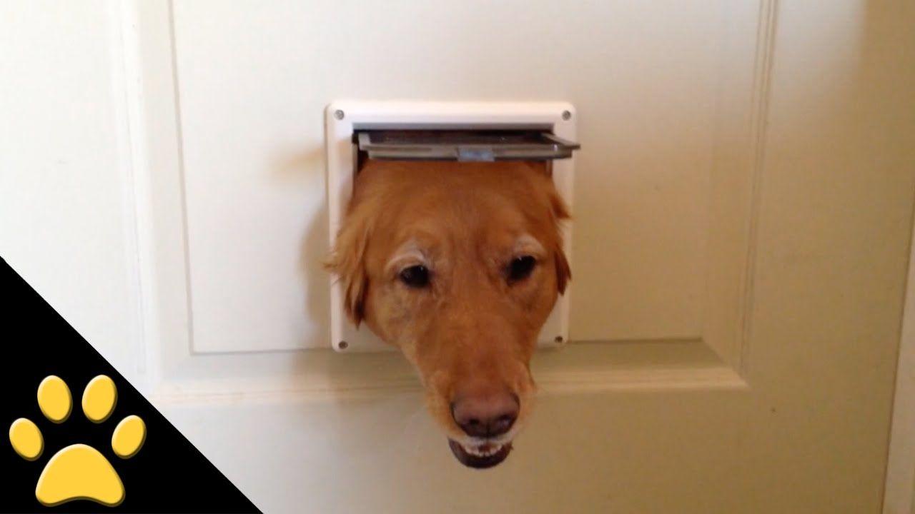 Three Dogs Take Turns Poking Their Heads Through A Doggie Door