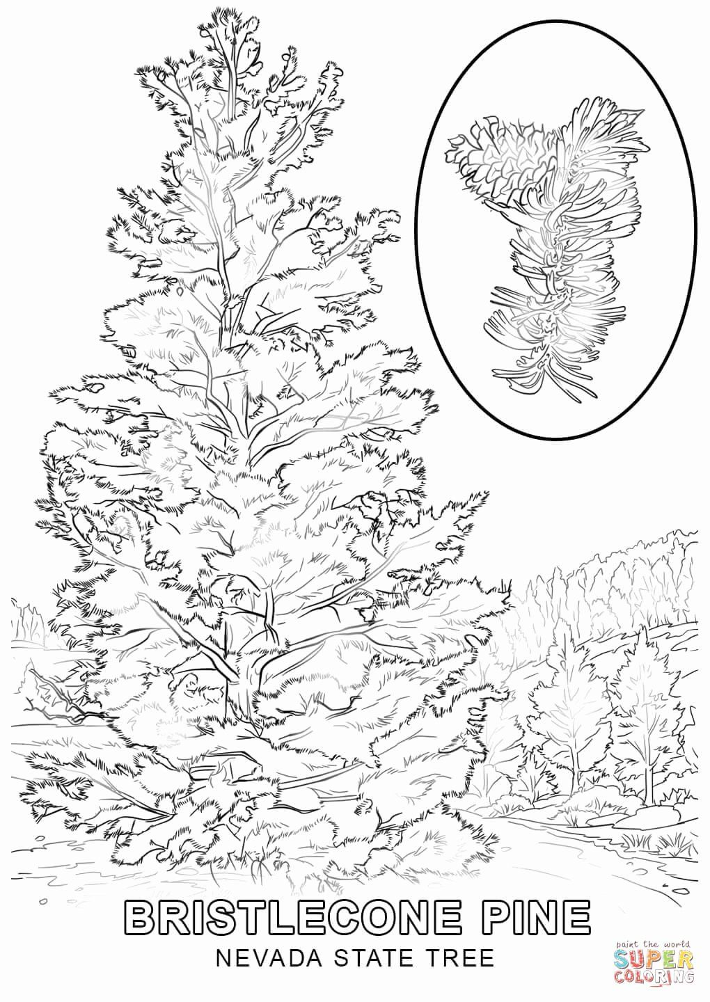 Washington State Flag Coloring Page Elegant Tennessee State Tree