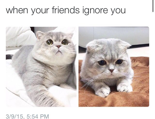 When Your Friends Ignore You Cat Memes Cute Animals Animal Memes