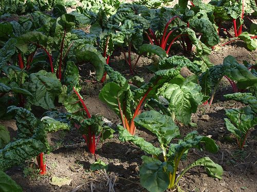 Vegetables You Can Grow In The Shade Growing Vegetables 400 x 300