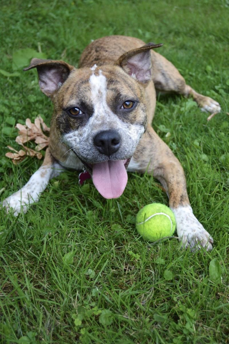 Adopt A Pet Madison Wi