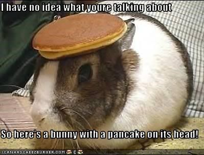 I Have No Idea What Youre Talking About So Here S A Bunny With A Pancake On Its Head Bunny Pancakes Animal Captions Funny Animals