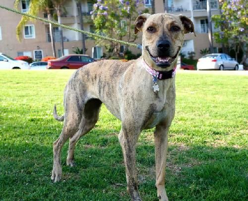 Dog Finder Adopt A Dog Or Cat Near You Dog Finder Dogs Grey