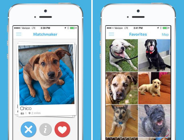 A Tinder For Pet Adoption Exists Pet Adoption Pets Adoption