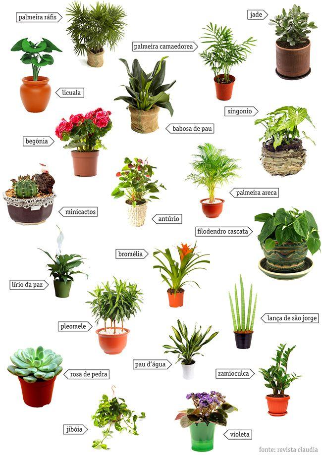 Ervas arom ticas e jardins em casa 11 dicas geniais - Plantas aromaticas jardin ...