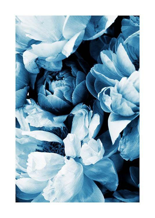 Blue Peony No2 Poster