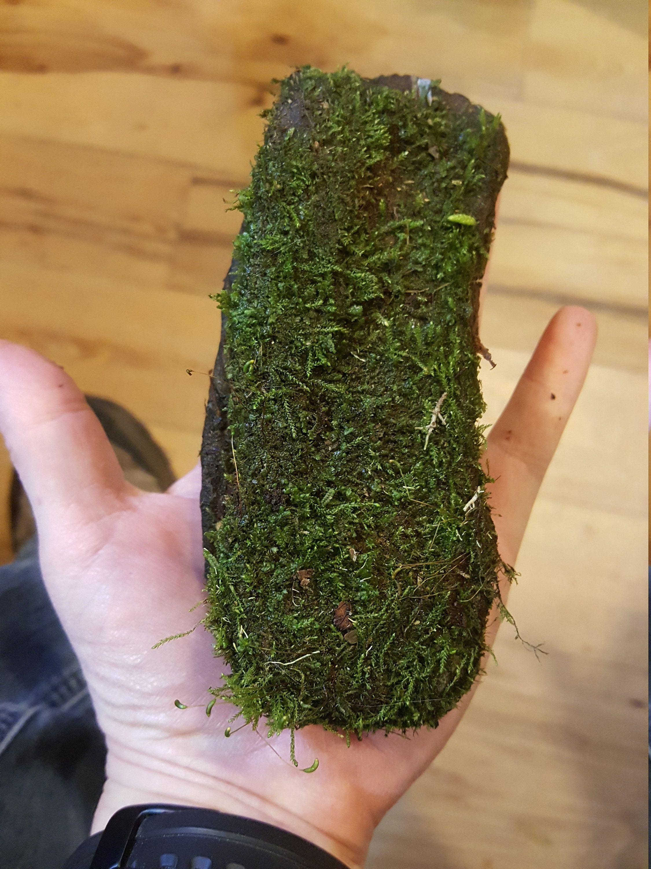 1 Mossy Rock Bag Of Moss Springtails Bioactive Microfauna Microflora Habitat Alachian Mountains Terrarium Vivarium