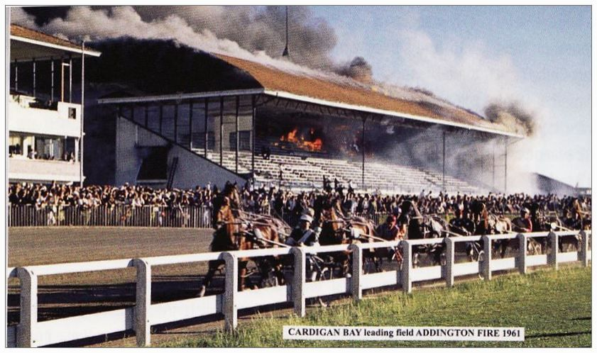 Cardigan Bay at Addington during a grandstand fire. 1961. Photo source  Harness Bred website. | Christchurch new zealand, Christchurch, New zealand