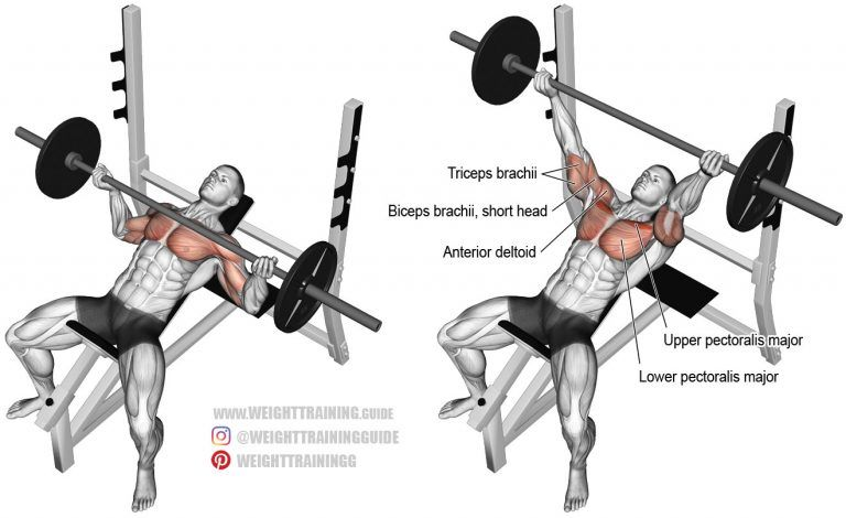 Incline Reverse Grip Barbell Bench Press Exercise Guide And