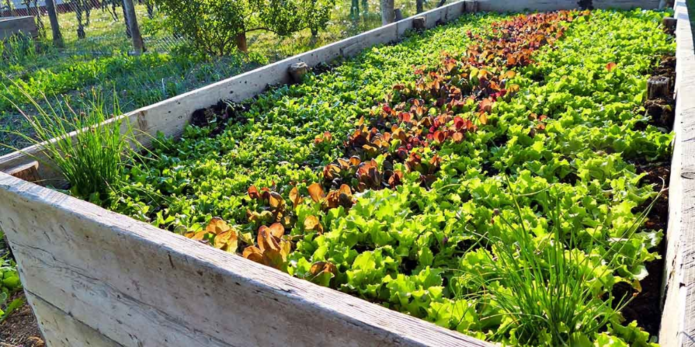 How To Start A Permaculture Garden: Beginner's Guide ...