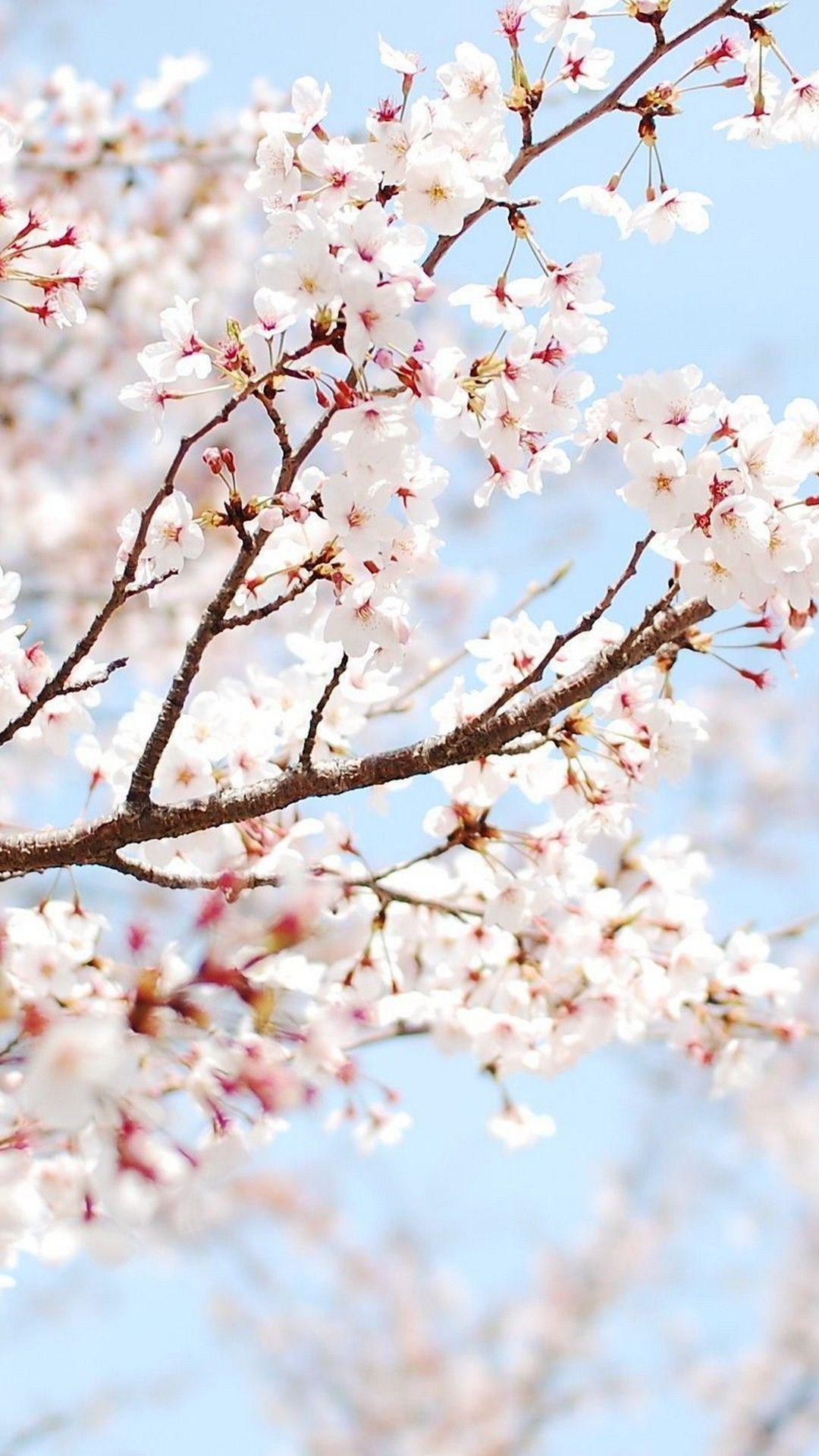 Spring Iphone Wallpaper Best Iphone Wallpaper Cherry Blossom Wallpaper Spring Wallpaper Flower Wallpaper
