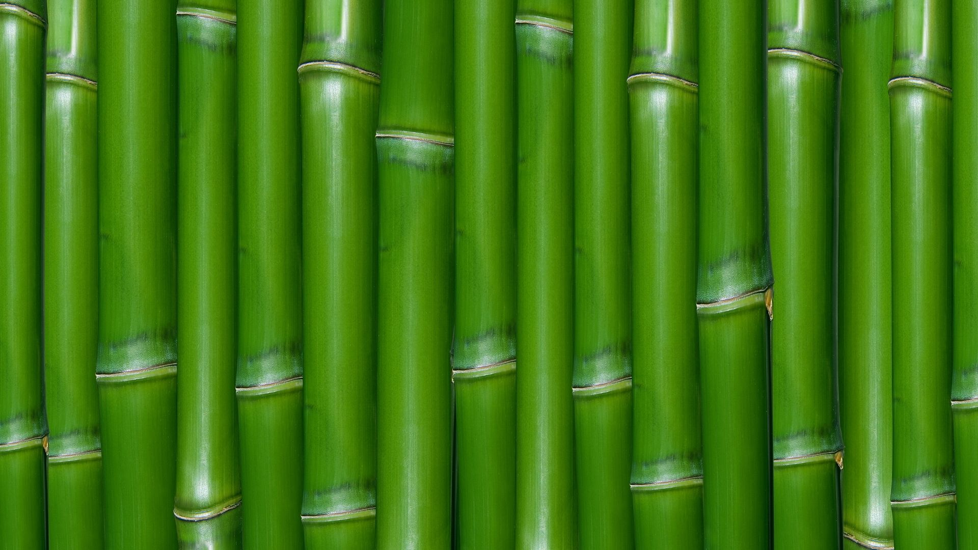 Fengshui  Bamboos Texture And Color With Sleek, Modern Designs,