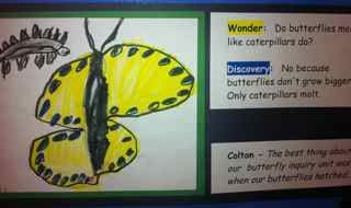 cbaykindergartenfitz [licensed for non-commercial use only] / Butterfly Inquiry