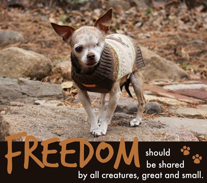 """""""FREEDOM should be shared by all creatures, great and small."""""""