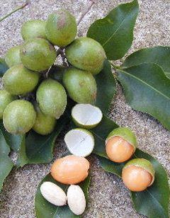 Spanish lime or Limoncillo