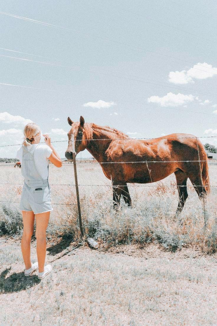 Pin Von Anna Auf Pferde