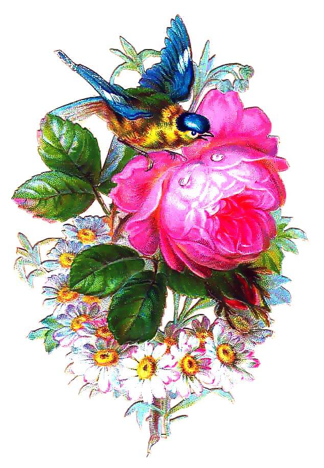 Открытки птицы и цветы