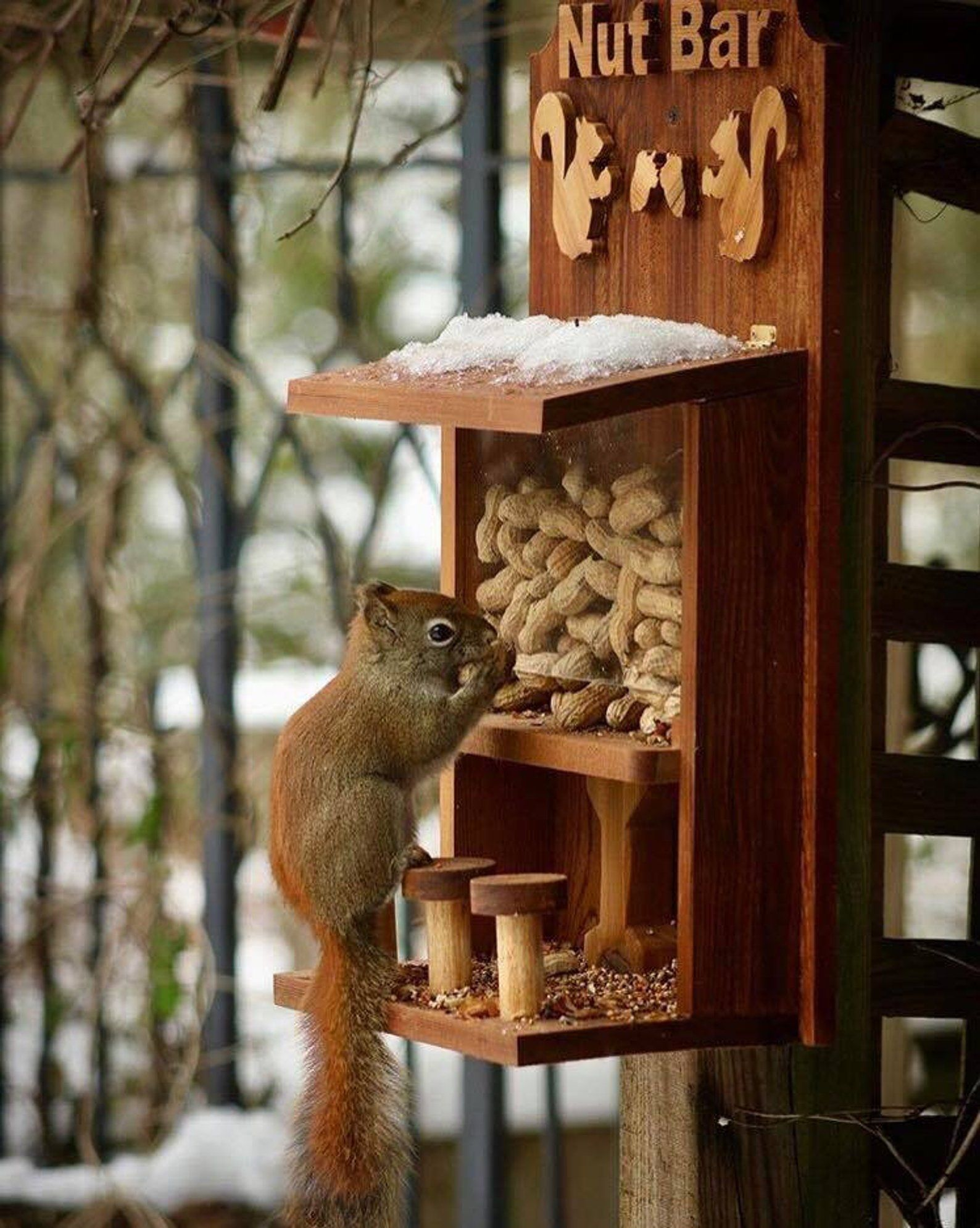 Nut Bar Squirrel Bird Feeder Etsy Wood Bird Feeder Squirrel Feeder Squirrel Feeder Diy