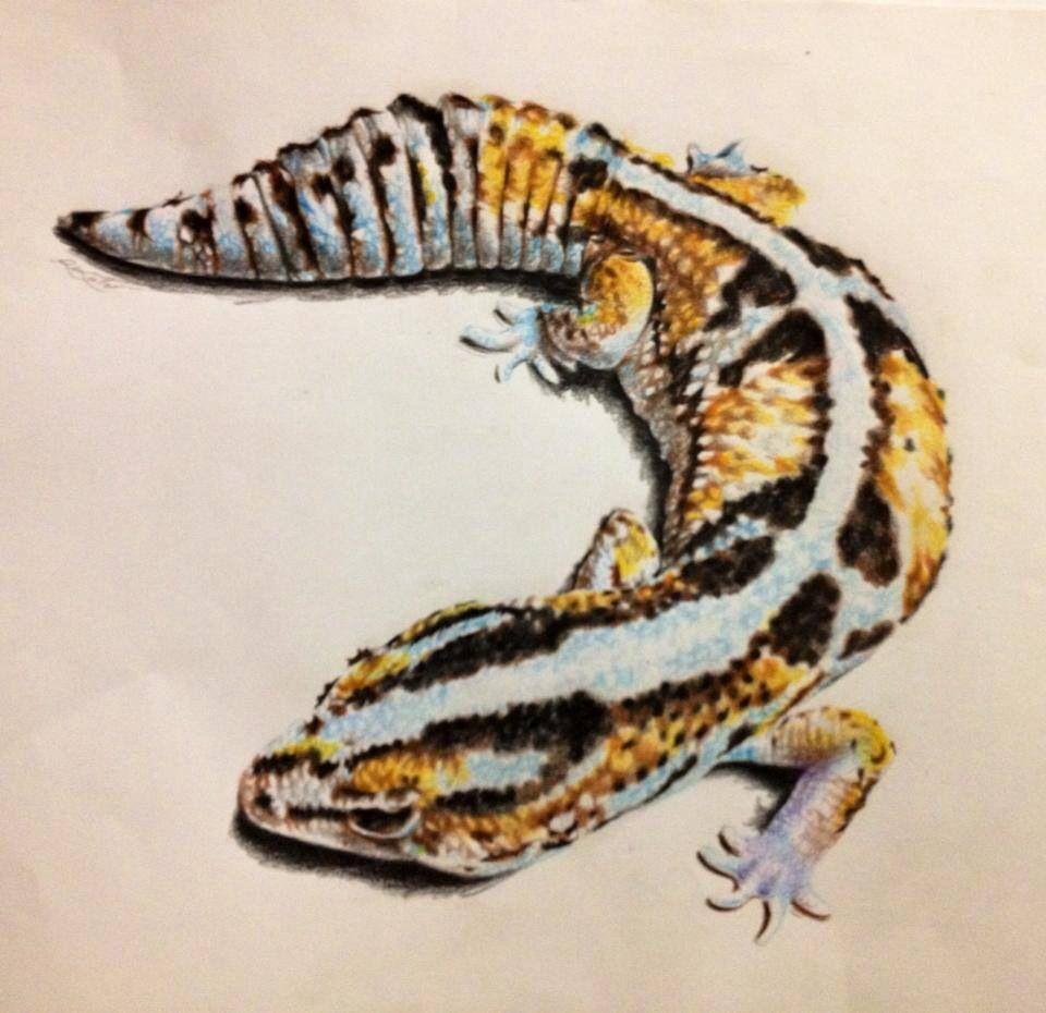 leopard gecko illustration