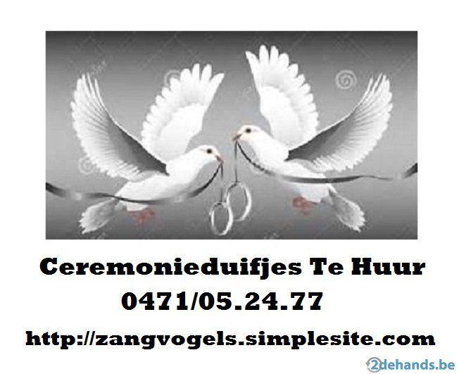 Sneeuwwitte Bruids-duifjes Te Huur (Top verzorgd!) - Te koop