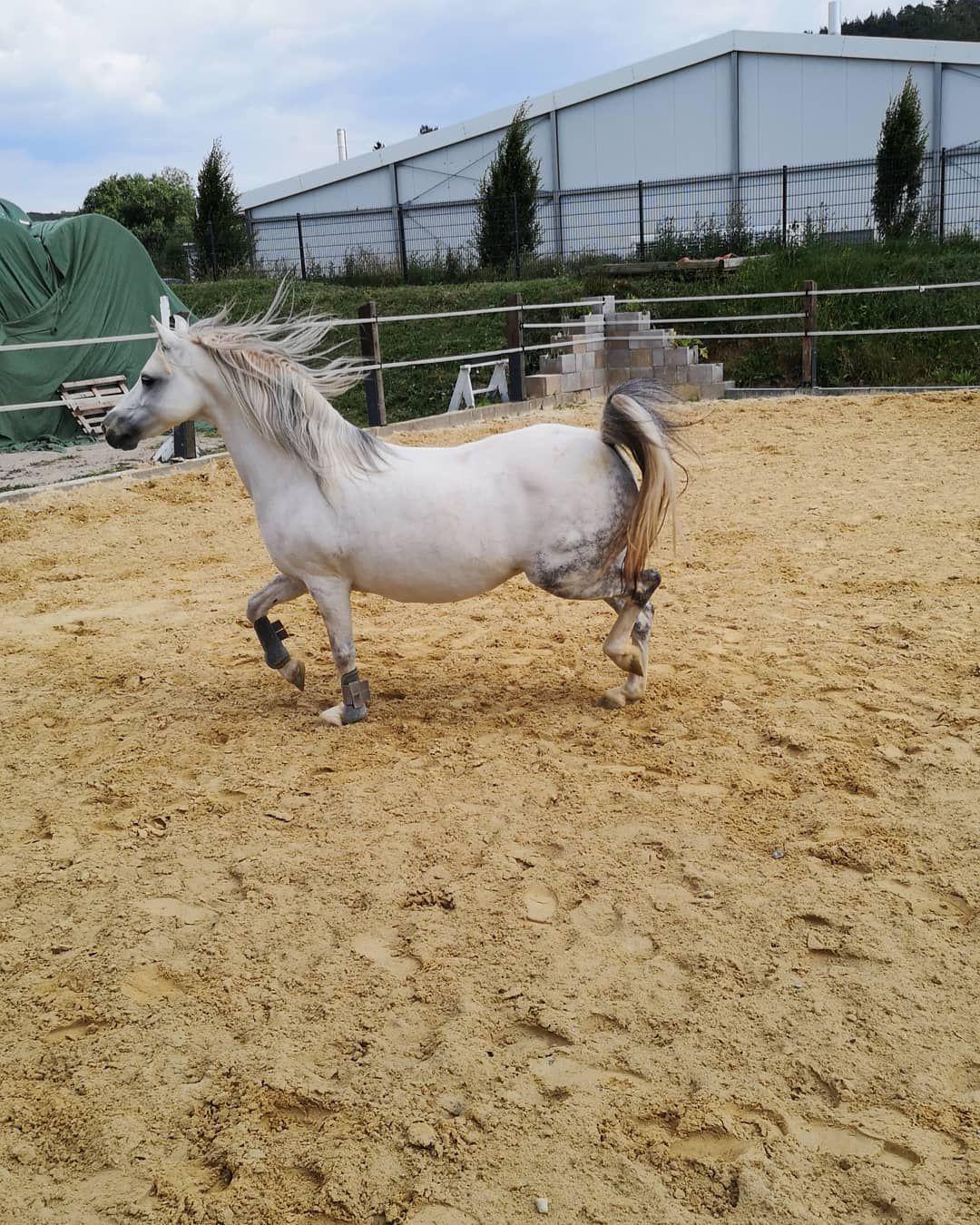 Hey Das Ist Asti Sie Ist 12 Jahre Alt Und Ein Welsh A Pony Sie Ist