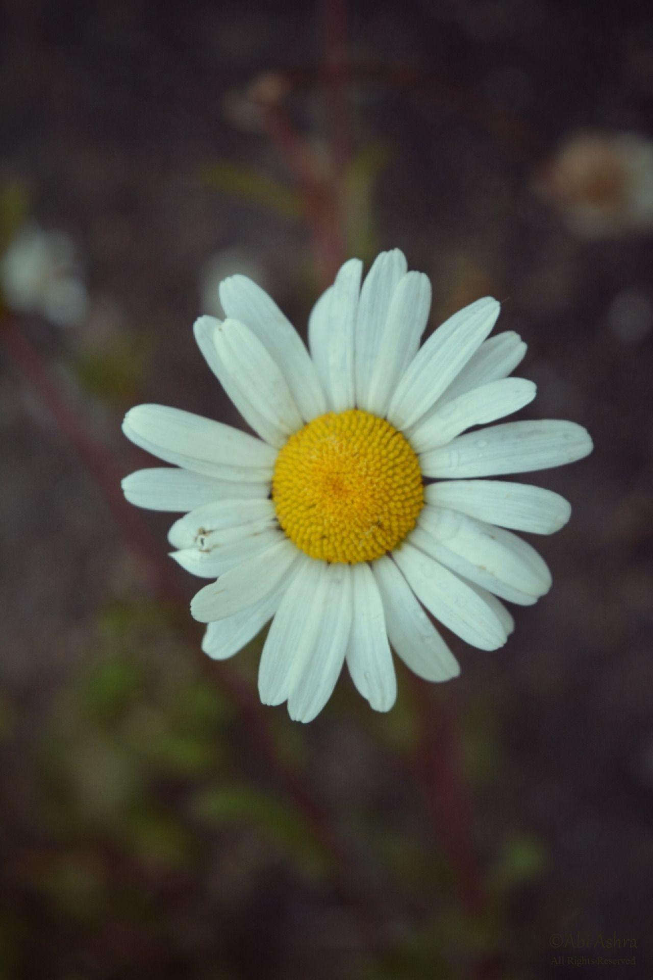 Love abia silent solace by abi ashra tumblr flowers pinterest love abia silent solace by abi ashra tumblr izmirmasajfo