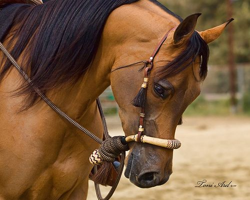 Would really love a hackmore like that. (The horse is pretty too!)