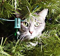 Holiday Pet Safety