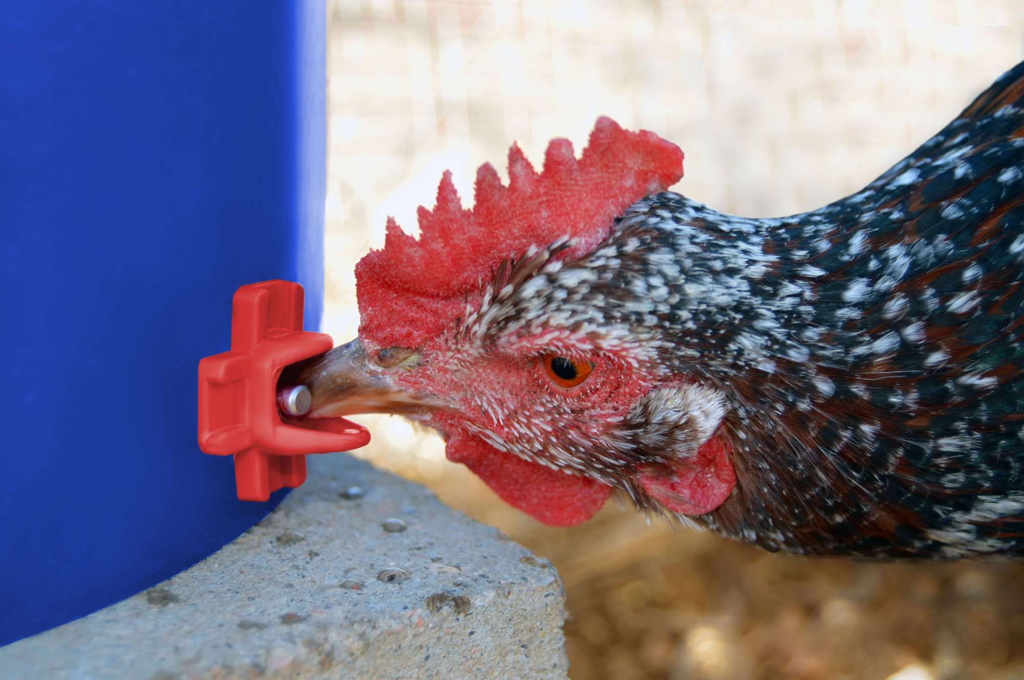 About Us Heritage Acres Market Llc In 2020 Chicken Water Feeder Wine Bottle Bird Feeder Automatic Chicken Waterer