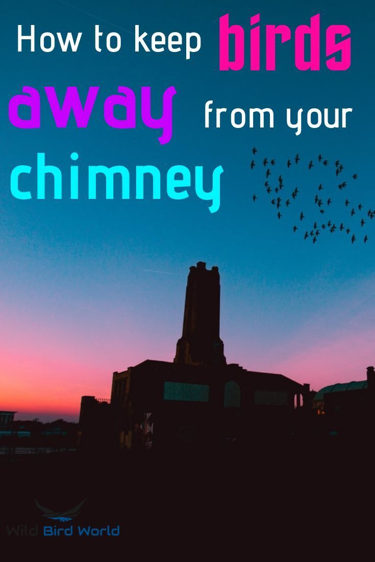 How To Get Birds Out Of A Chimney? in 2020 Attract wild