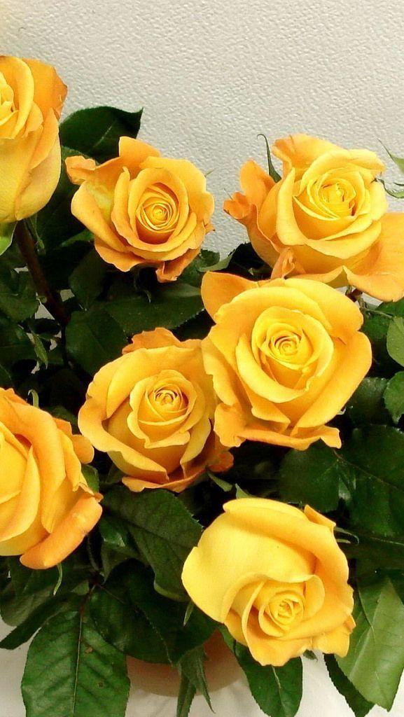 Nature Wallpaper Iphone Yellow Roses Flowers Yellow Flower Wallpaper