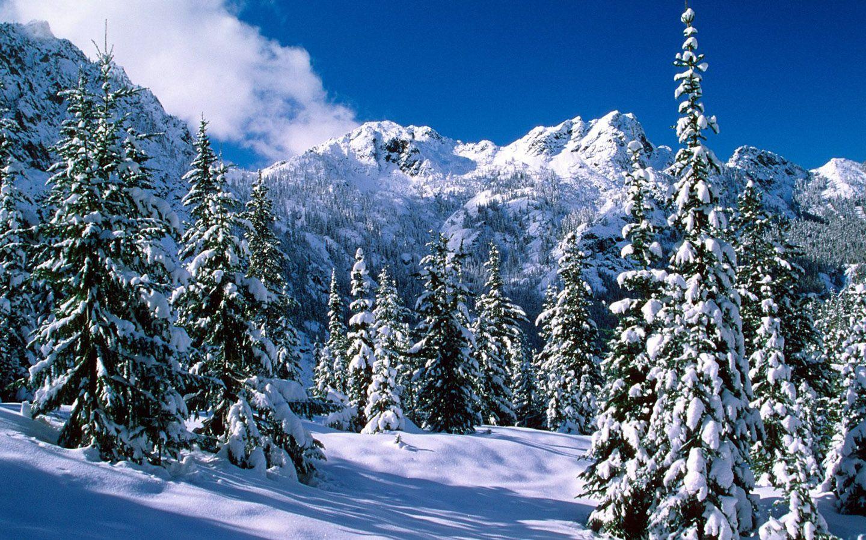 Winter Wonderland Scenes Winter Wonderland Dreamy Snow