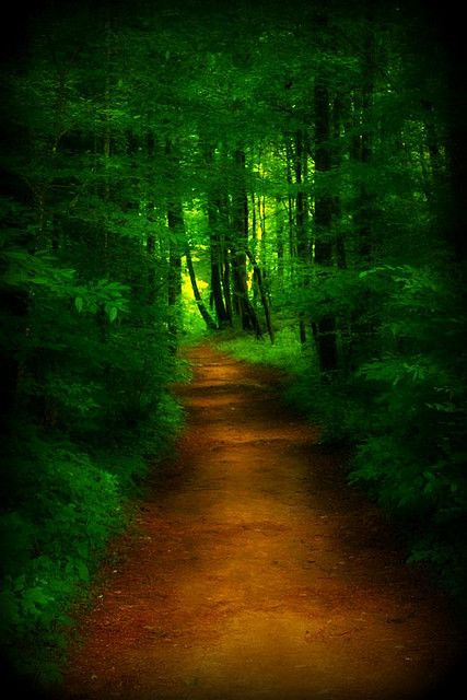 The Forest Path by astanse♥(Angela Stansell) on Flickr.
